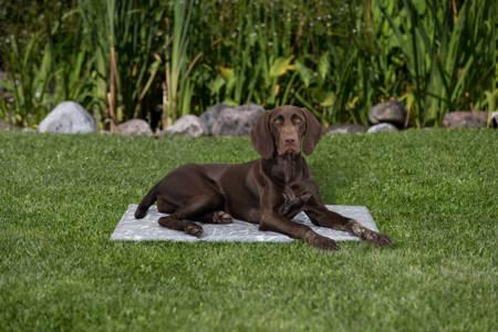 Mata chłodząca dla psa L 65x50cm szary marmur