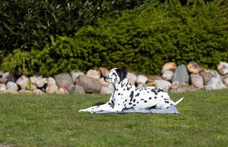 Mata chłodząca dla psa XL 90x60cm szary marmur